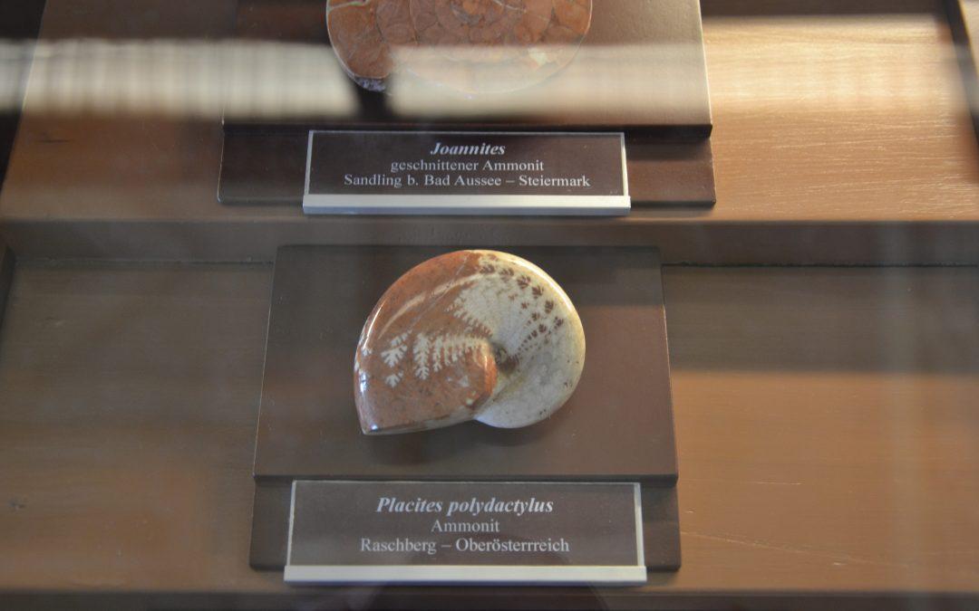 Entre météorites, ammonites, dinosaures et australopithèques, notre visite au Naturhistorisches Museum de Vienne