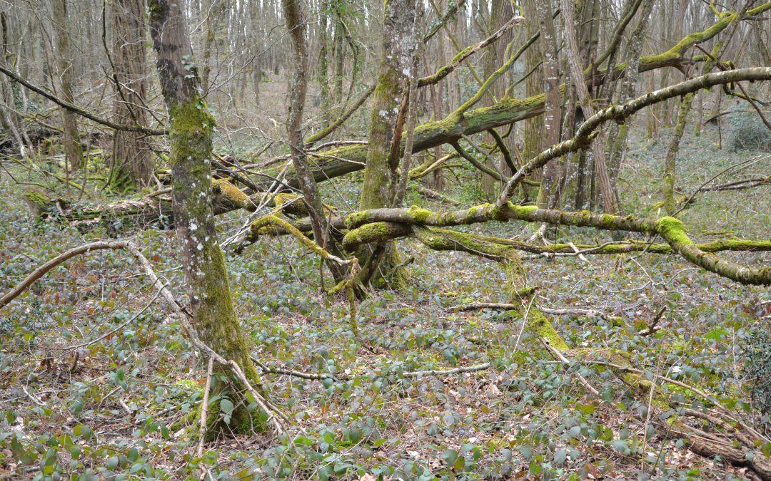 Notre bois, notre petite forêt