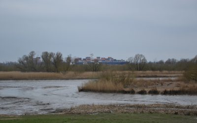 Balade le long de l'Elbe à marée basse… à côté de Hambourg
