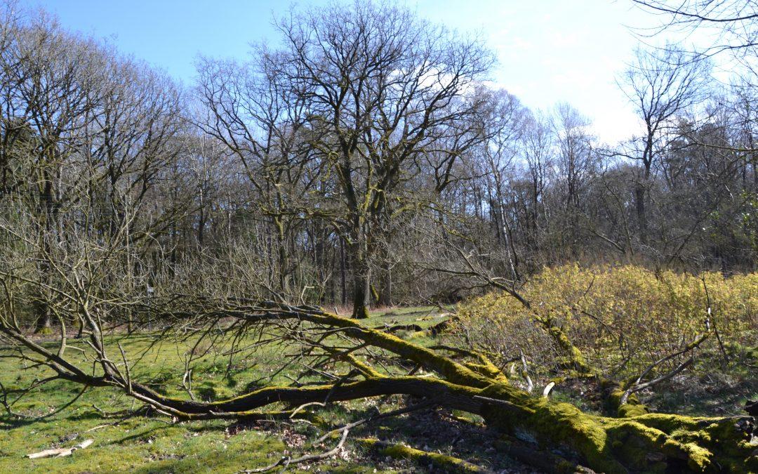 Fischbeker Heide, entre forêt et tombes de l'âge de bronze
