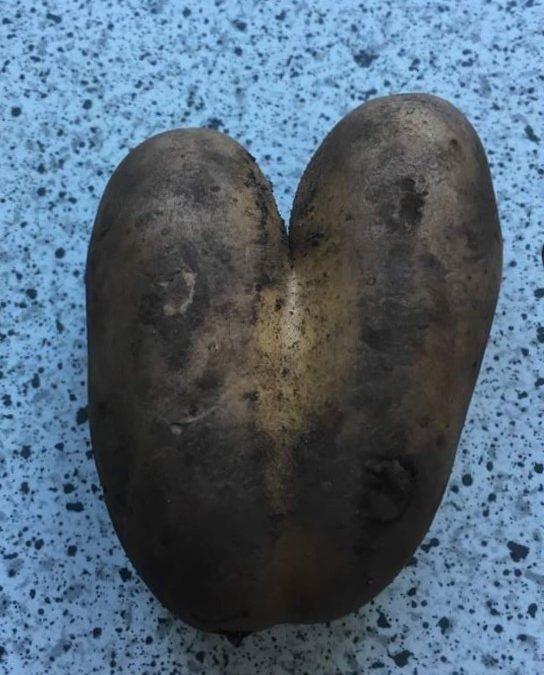 Chers légumes ! (RV Histoires expatriées)