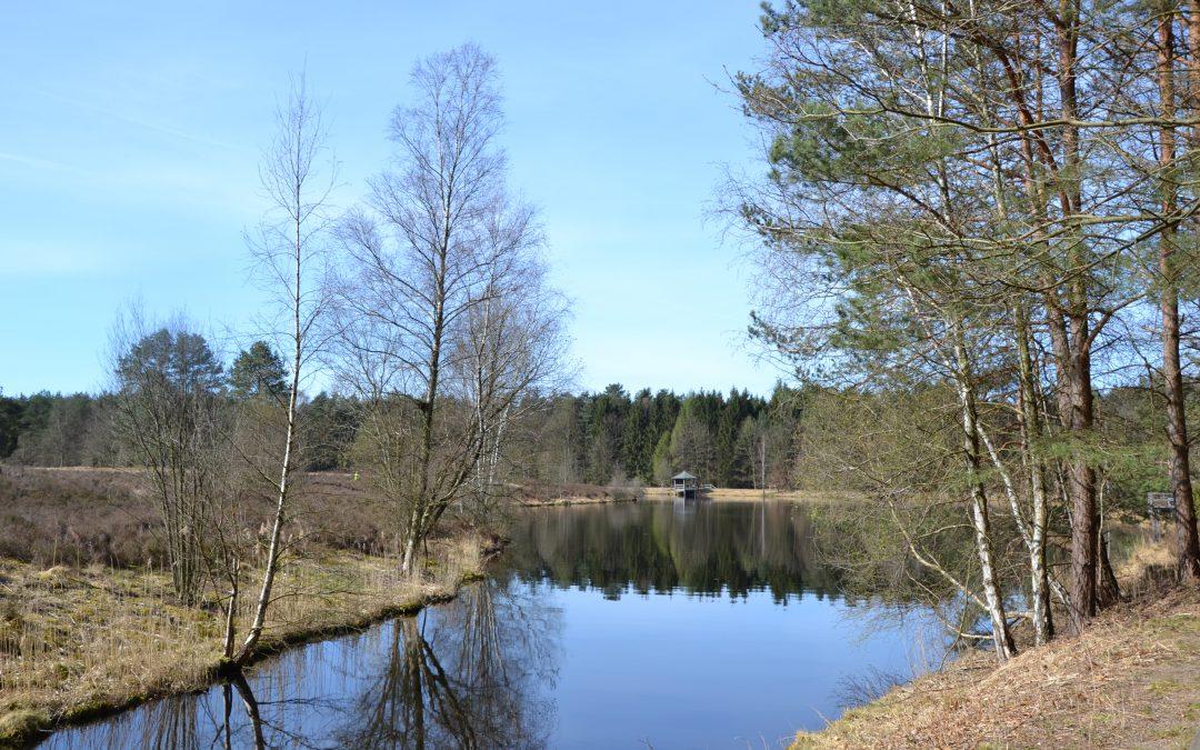 À la découverte de la Lüneburger Heide : notre excursion autour de l'Angelbecksteich