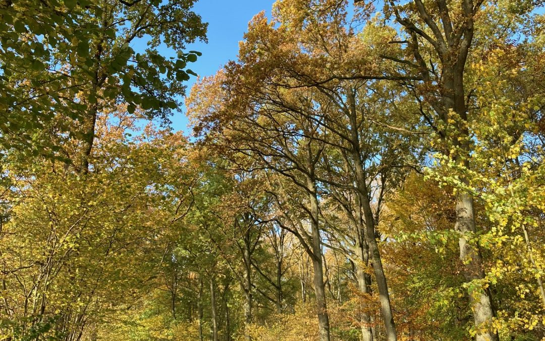 Duvenstedter Brook : une réserve naturelle aux multiples paysages