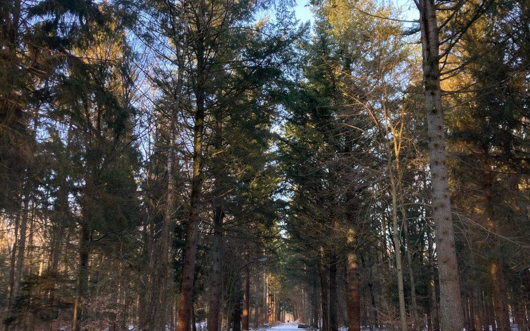 Dans les petites collines enneigées de la Wohldorfer Wald